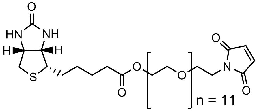 马来酰亚胺十一聚乙二醇生物素酯