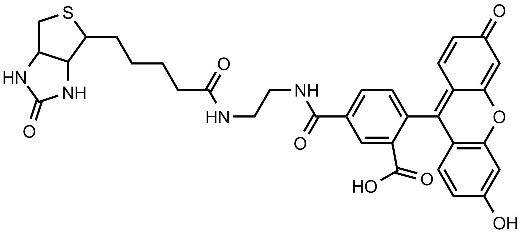 生物素-4-荧光素