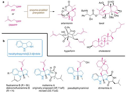 上海有机所在吲哚衍生物不对称异戊烯基化去芳构化反应研究中取得重要进展